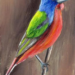 Art: Painted Bunting ACEO by Artist Janet M Graham