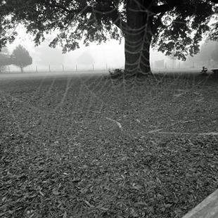 Art: Pale Spiderweb, Morning Fog by Artist Chris Jeanguenat