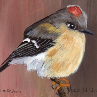 Art: Ruby Crowned Kinglet ACEO by Artist Janet M Graham