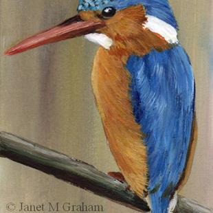 Art: Malachite Kingfisher ACEO by Artist Janet M Graham