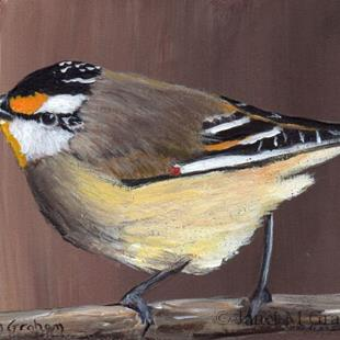 Art: Striated Pardalote ACEO by Artist Janet M Graham