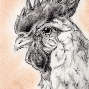 Art: Charcoal Rooster by Artist Kim Loberg