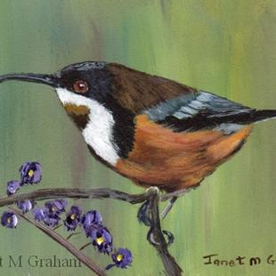 Art: Eastern Spinebill ACEO by Artist Janet M Graham