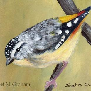 Art: Spotted Pardalote ACEO by Artist Janet M Graham