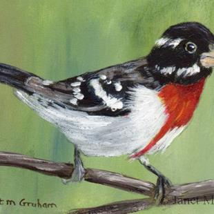 Art: Rose Breasted Grosbeak ACEO by Artist Janet M Graham