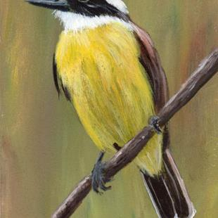 Art: Great Kiskadee ACEO by Artist Janet M Graham