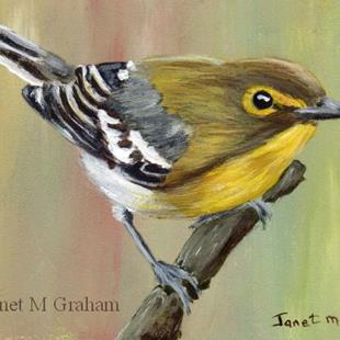Art: Yellow Throated Vireo ACEO by Artist Janet M Graham