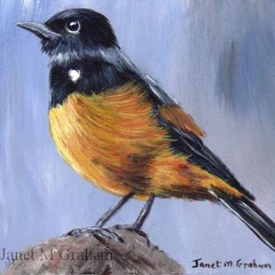 Art: Mocking Cliff Chat ACEO by Artist Janet M Graham