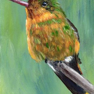 Art: Tufted Coquette ACEO by Artist Janet M Graham