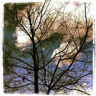 Art: Bare tree, clouds and sky by Artist Muriel Areno