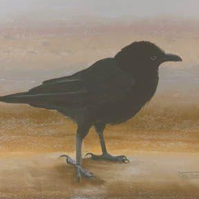 Art: Young Crow by Artist Carol Thompson