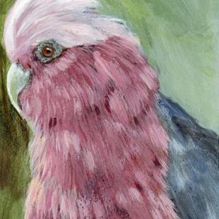 Art: Galah ACEO by Artist Janet M Graham