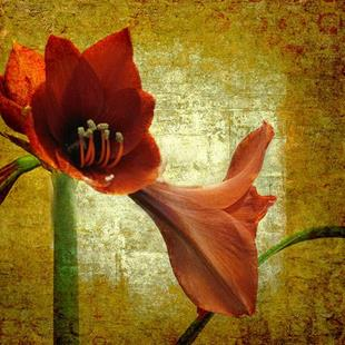 Art: Stately Amaryllis by Artist Carolyn Schiffhouer