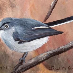 Art: Blue Grey Gnatcatcher ACEO by Artist Janet M Graham