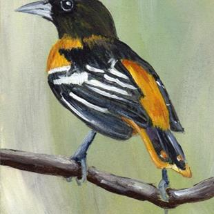 Art: Baltimore Oriole ACEO by Artist Janet M Graham