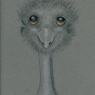 Art: I Emu-portrait of Henrietta by Artist Sherry Key