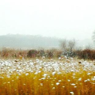 Art: winter prairie lr lrg .jpg by Artist Alma Lee