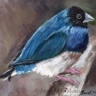 Art: Black Headed Gouldian Finch ACEO by Artist Janet M Graham