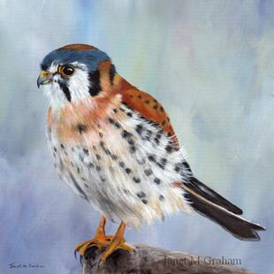 Art: American Kestrel by Artist Janet M Graham