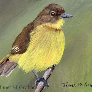 Art: Yellow Bellied Greenbul ACEO by Artist Janet M Graham