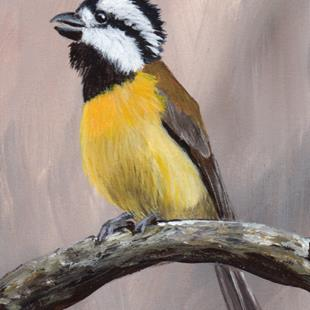 Art: Crested Shriketit ACEO by Artist Janet M Graham