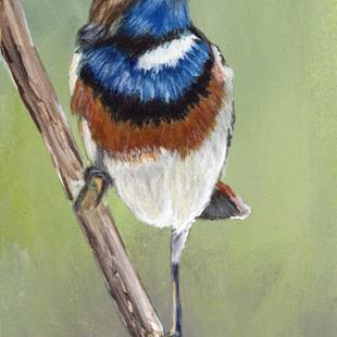 Art: Bluethroat ACEO by Artist Janet M Graham
