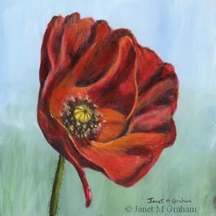 Art: Poppy by Artist Janet M Graham