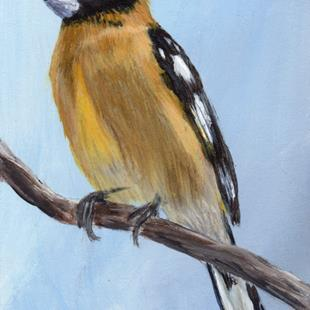 Art: Black Headed Grosbeak ACEO by Artist Janet M Graham