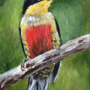 Art: Yellow Fronted Woodpecker ACEO by Artist Janet M Graham