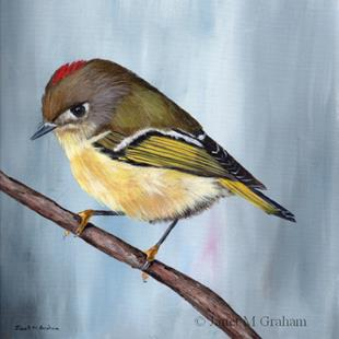 Art: Ruby Crowned Kinglet 2 by Artist Janet M Graham