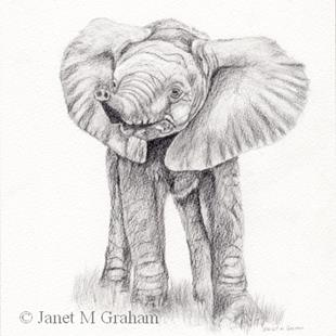Art: Baby Elephant 2 by Artist Janet M Graham