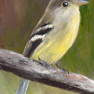 Art: Yellow Bellied Flycatcher ACEO by Artist Janet M Graham