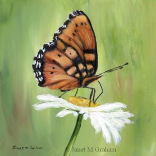 Art: Gaudy Commodore Butterfly by Artist Janet M Graham