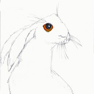 Art: HARE h3040 by Artist Dawn Barker