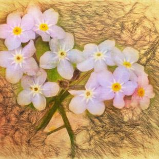 Art: Small Beauties by Artist Carolyn Schiffhouer