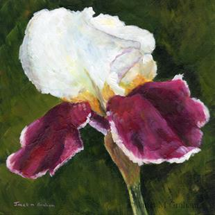 Art: Iris by Artist Janet M Graham