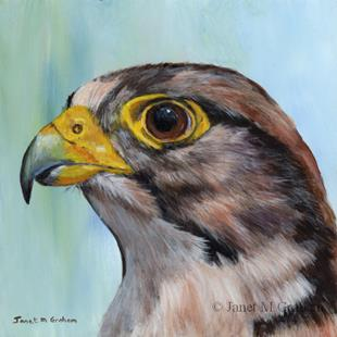 Art: Lanner Falcon by Artist Janet M Graham