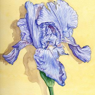 Art: Blue Iris by Artist Mark Satchwill