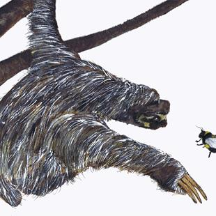 Art: THE SLOTH & THE BUMBLE BEE sloth3 by Artist Dawn Barker
