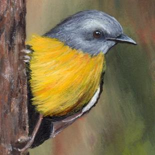 Art: Eastern Yellow Robin ACEO by Artist Janet M Graham