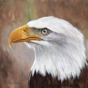 Art: Bald Eagle No 3 by Artist Janet M Graham