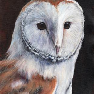 Art: Barn Owl by Artist Janet M Graham