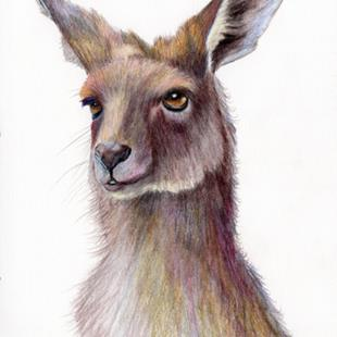 Art: Kangaroo by Artist Janet M Graham