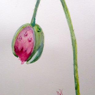 Art: Poppy Bud and Dew Drops by Artist Delilah Smith