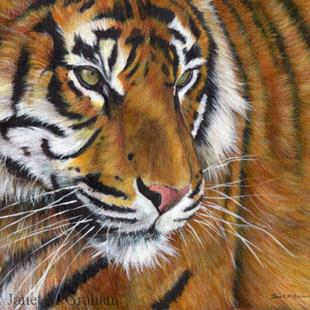 Art: Tiger by Artist Janet M Graham