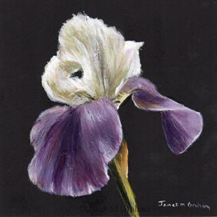 Art: Iris No 2 by Artist Janet M Graham