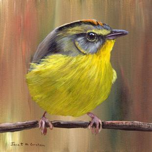 Art: Golden Crowned Warbler by Artist Janet M Graham