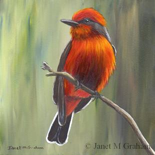 Art: Vermilion Flycatcher by Artist Janet M Graham