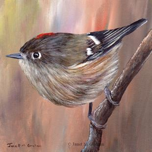 Art: Ruby Crowned Kinglet No 3 by Artist Janet M Graham