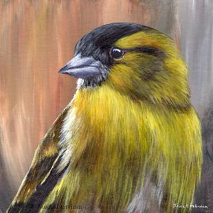 Art: Siskin Portrait by Artist Janet M Graham